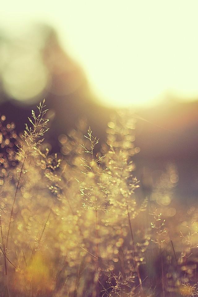 blurred beautiful natural landscape - photo #19