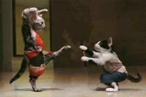 Cats Kung Fu