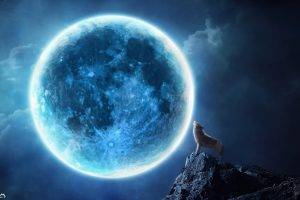 Wolves Howling Night