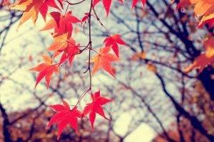 landscape, Winter, Leaves, Plants, Nature