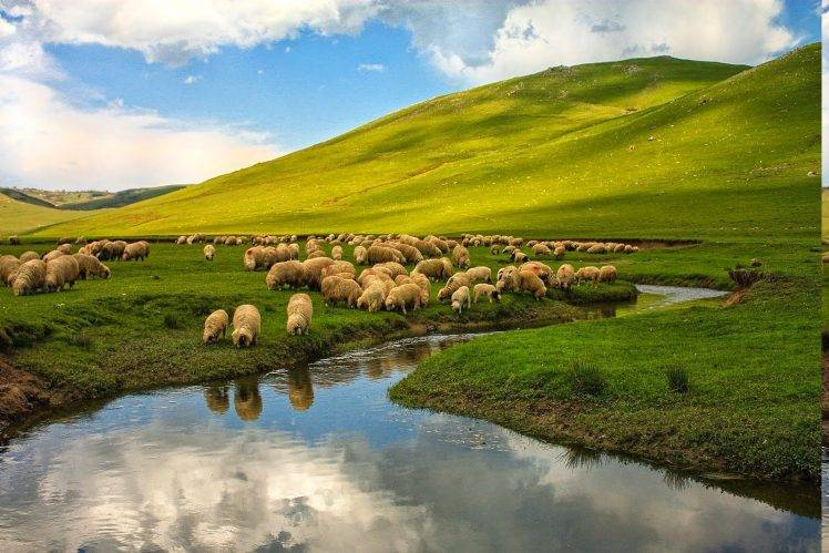 nature, Landscape, Turkey, Ordu, Sheep, River, Animals, Hill, Plains HD Wallpaper Desktop Background