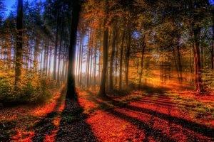nature, Landscape, Forest, Trees