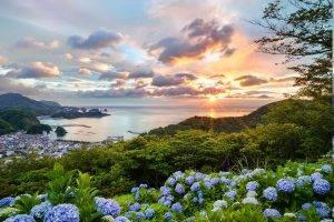Japan, Sunset, Cityscape, Flowers, Hill, Trees, Hydrangea, Bay, Ports, Summer, Clouds, Green, Orange, Blue, Purple, Nature, Landscape, Blue Flowers