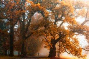 mist, Walking, Park, Fall, Trees, Bench, Nature, Orange, Landscape