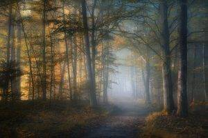 mist, Path, Fall, Forest, Leaves, Trees, Sunlight, Morning, Nature, Landscape, Dirt Road