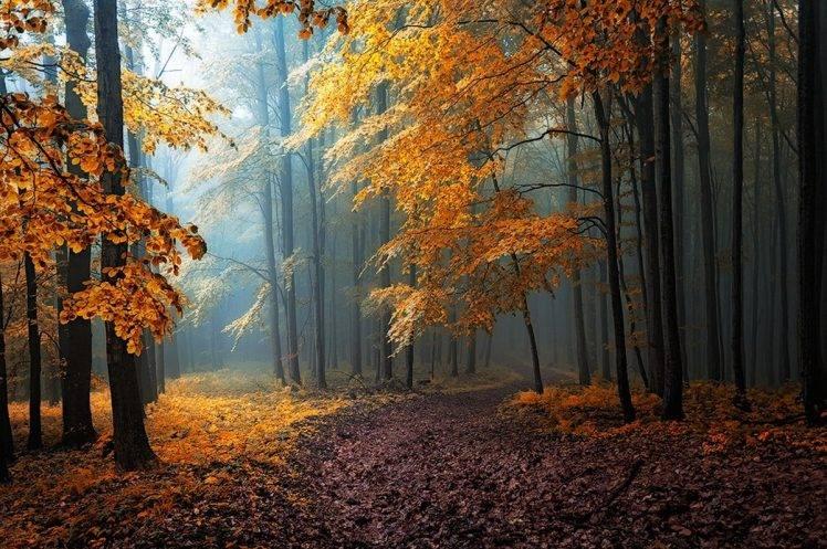 fall, Mist, Leaves, Forest, Road, Trees, Path, Sunlight, Sun Rays, Nature, Yellow, Orange, Blue, Landscape, Dirt Road HD Wallpaper Desktop Background