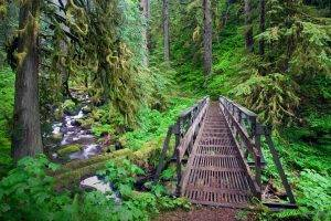 creeks, Forest, Bridge, Path, Trees, Oregon, Green, Ferns, Moss, Shrubs, Nature, Landscape, River