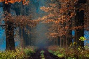 fall, Shrubs, Mist, Trees, Road, Path, Leaves, Sunrise, Nature, Landscape
