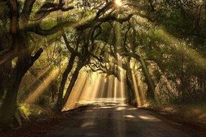 landscape, Nature, Road, Sun Rays, Oak Trees, South Carolina, Grass, Shrubs, Leaves
