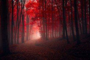 nature, Landscape, Trees, Fall, Red, Path, Leaves, Mist, Forest, Sunrise, Sunlight