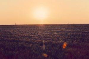 landscape, Sunset, Photography, Farm, Power Lines, Nature, Field, Lens Flare, Clear Sky, Sunlight