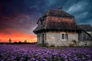 landscape, Nature, Sunset, Farm, House, Old, Sky, Flowers, Lavender, Clouds, Field, Purple, Spring