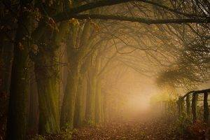 path, Leaves, Forest, Mist, Nature, Trees, Landscape, Fence, Fall, Morning, Sunrise, Moss, Shrubs, Atmosphere