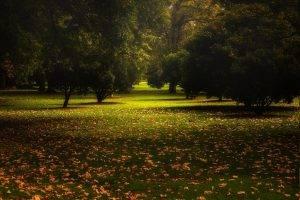 nature, Landscape, Park, Leaves, Trees, Fall, Grass, Australia, Calm, Green