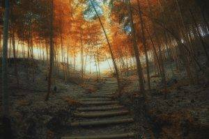 nature, Landscape, Path, Fall, Stairs, Trees, Bamboo, Mist, Sunrise, Forest