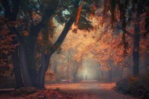 nature, Landscape, Park, Trees, Fall, Mist, Morning, Walking, Bench, Path, Atmosphere, Shrubs