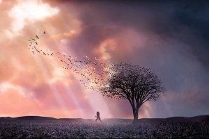 artwork, Trees, Landscape, Nature, Sunlight, Clouds, Birds