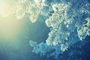 anime, Nature, Snow, Winter, Cold, Sunlight, Peaceful