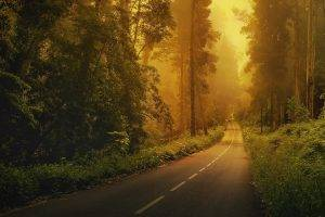 road, Forest, Trees, Green, Nature, Landscape