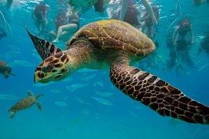 turtle, Animals, Sea