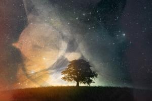 cat, Space, Trees