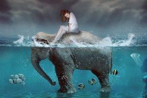 digital Art, Elephants, Fish, Split View