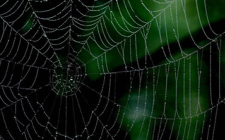 spiderwebs, Minimalism, Nature, Closeup, Macro HD Wallpaper Desktop Background