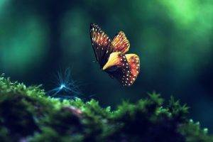 animals, Insect, Butterfly