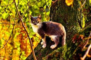 nature, Cat, Trees, Twigs, Animals, Moss
