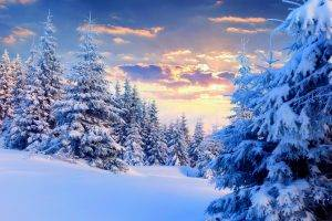 nature, Landscape, Snow, Winter, Forest, Trees, Sunset, Pine Trees