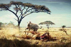 fantasy Art, Lion, Zebras, Africa, Animals, Savannah