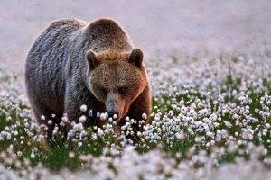 animals, Bears, Flowers, Depth Of Field