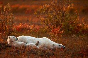 nature, Animals, Baby Animals, Polar Bears, Field, Grass, Plants, Sad, Global Warming