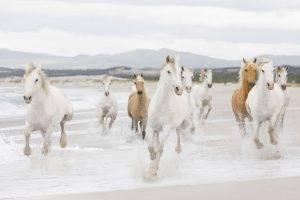 animals, Horse