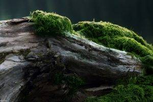wood, Forest, Moss, Green, Trees, Nature