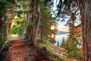 forest, Path, Crater Lake, Trees, Lake, HDR, Sunset, Hill, Nature, Landscape
