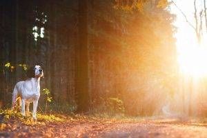 animals, Dog, Road, Sunset, Sunlight