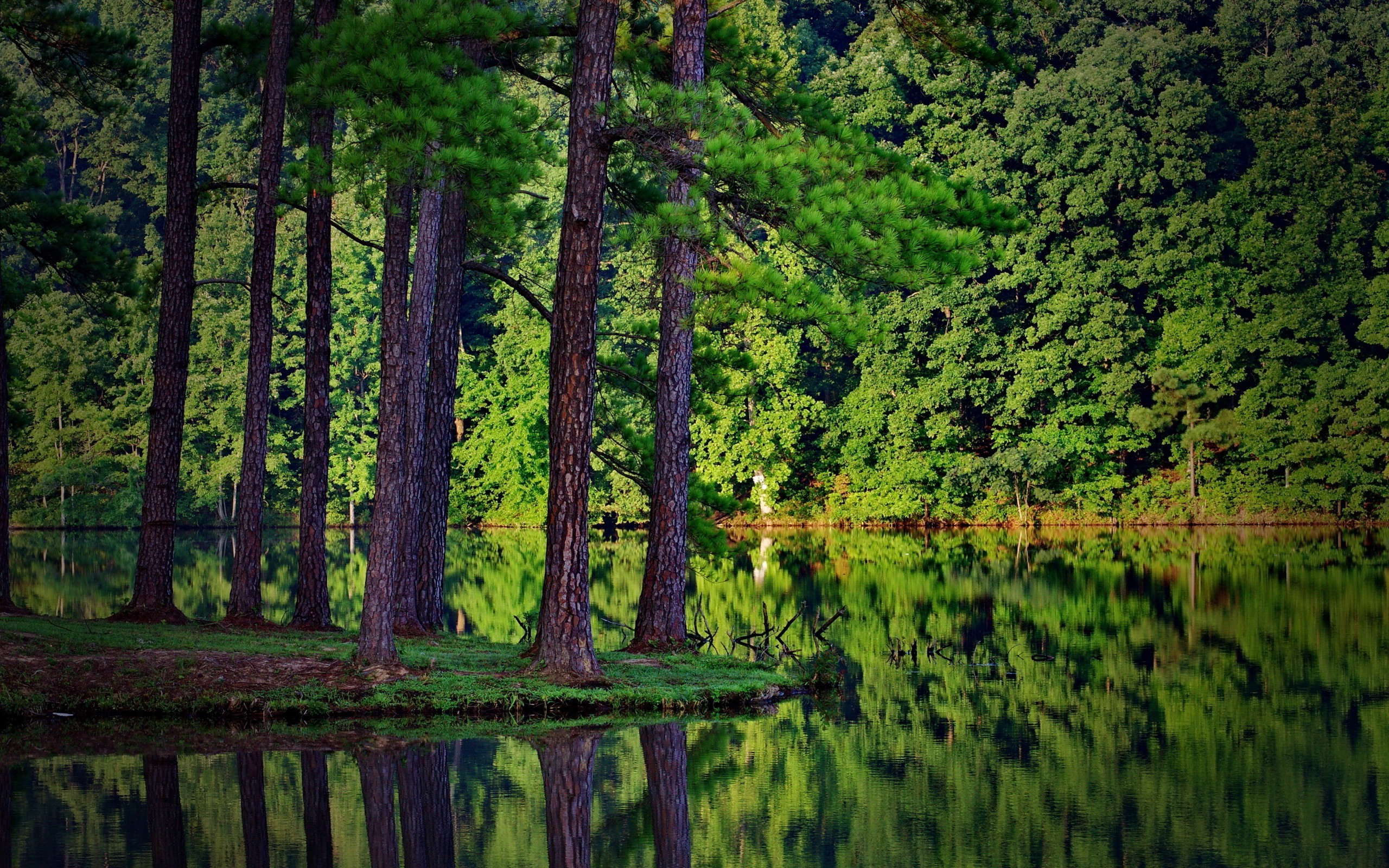 Lake Forest Sports Cars >> summer, Trees, Forest, Lake, Reflection, Spruce, Landscape, Nature, Wood Wallpapers HD / Desktop ...