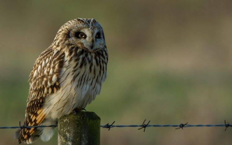 animals, Birds, Owl HD Wallpaper Desktop Background
