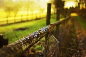 depth Of Field, Fence, Nature, Sunlight
