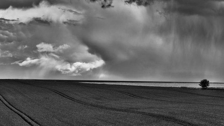 nature, Trees, Monochrome, Field, Clouds, Rain, Horizon, Landscape HD Wallpaper Desktop Background