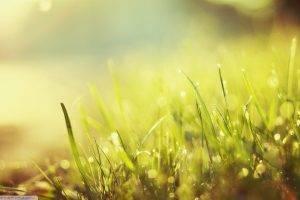 nature, Grass