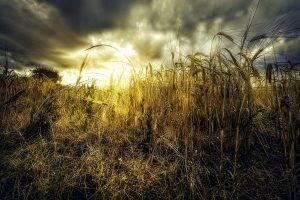 landscape, Nature, Sunset, Clouds, Grass, Bright, Shrubs
