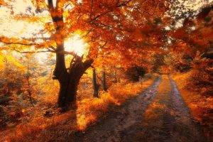 nature, Landscape, Road, Trees, Fall, Leaves, Sunrise, Red, Shrubs