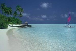 nature, Landscape, Catamaran, Beach, Palm Trees, Sand, Shrubs, Tropical, Island, Sea, Summer