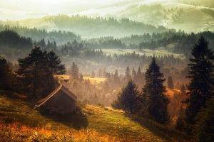 nature, Landscape, Mist, Forest, Cabin, Hill, Morning, Grass, Trees