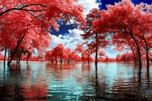 nature, Landscape, Surreal, Trees, Water, Park, Clouds, Pink, White, Blue