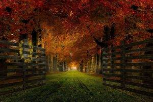 nature, Landscape, Gates, Path, Grass, Trees, Fall, Leaves