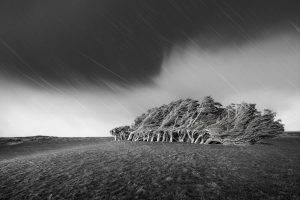 nature, Landscape, Rain, Trees, Wind, Steppe, Dark, Clouds, Monochrome