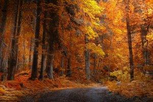 landscape, Nature, Fall, Forest, Road, Yellow, Trees, Daylight